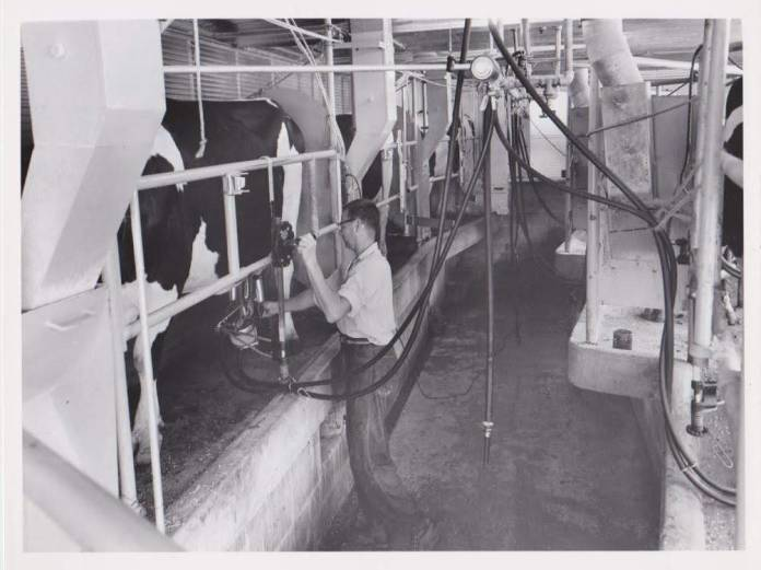 Earl Phillips in the Phillips Bros Dairy milking parlor with Surge milking equipment and Holstein cows